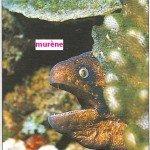 poissons dans mon pays poimur-150x150