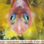poissonmini-150x150